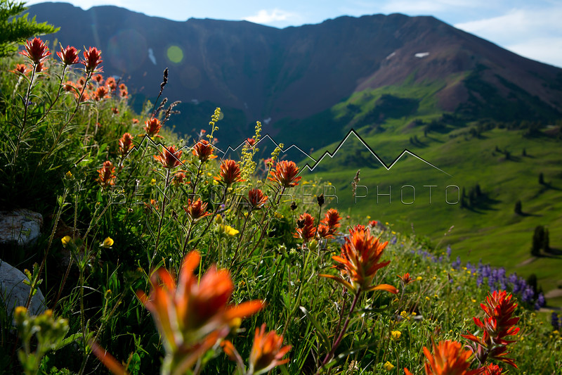 Flowers in the Elk Range, CO