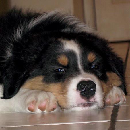 OCT 12 Dallas Pups Have Homes