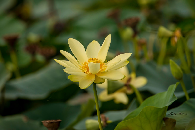 Lilly Flower_DWL3902.jpg