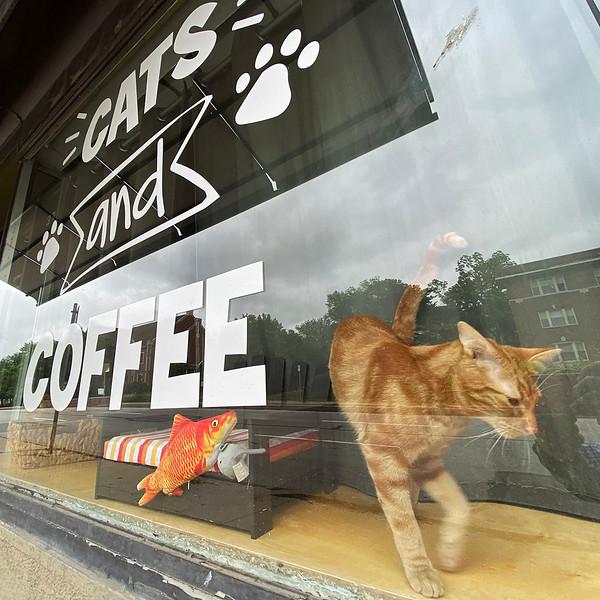 Cat cafe square.jpg