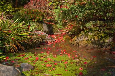 Arboretum /Japanese Garden
