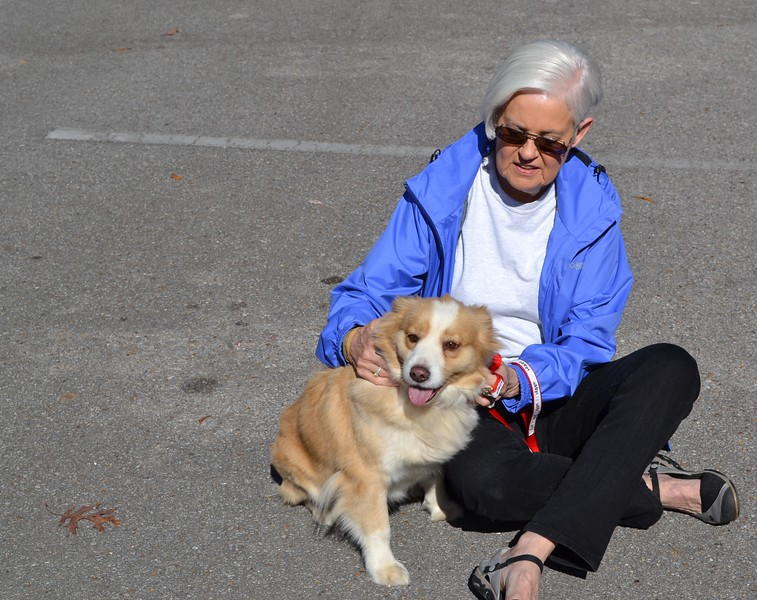 sweet doggie for adoption.jpg