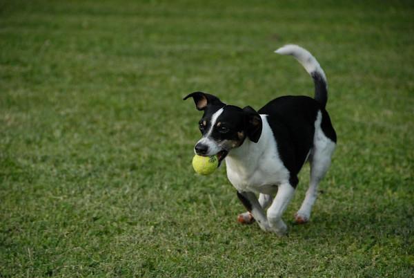 2010-05-21 - Denville Dog Park