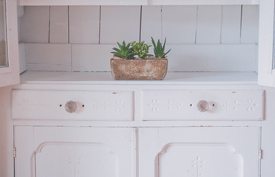 Succulents In White Cabinet