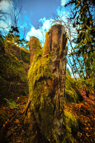 NearForest1 (1 of 1).jpg