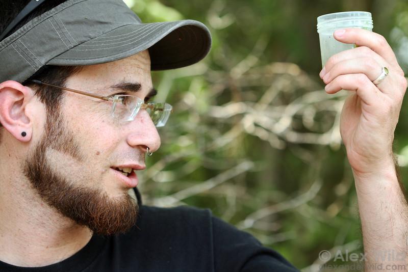 Eli Sarnat examines a vial of ants in North Carolina.