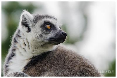 Twycross Zoo 2018
