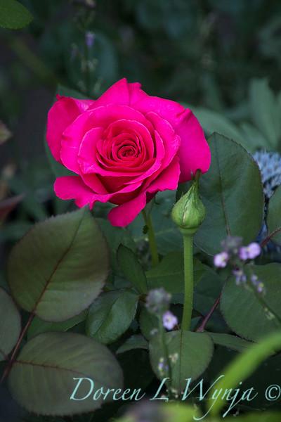 Rosa 04-00578 0r 06-02042_5293.jpg