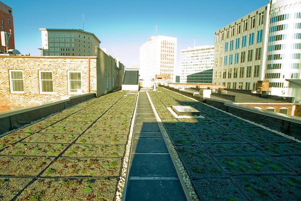 Roof Greening