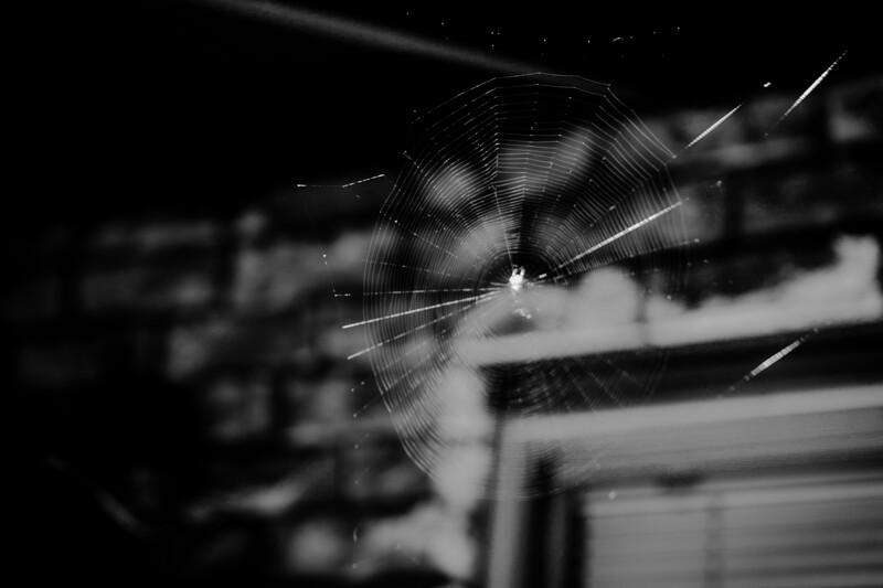 spider web 2017
