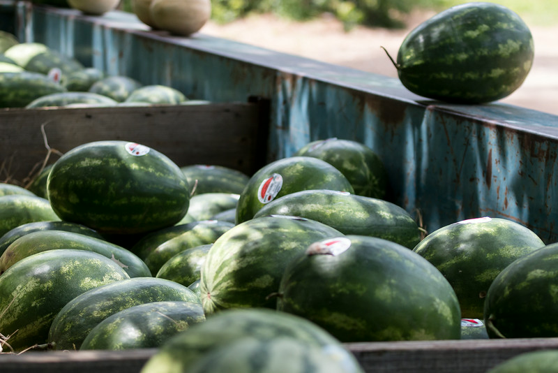 watermelons in a metal trailer