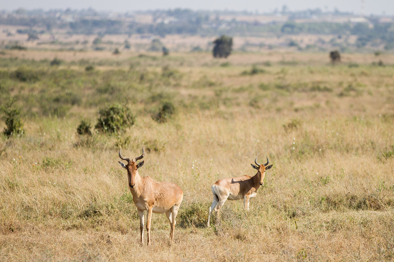 2013-Kenya2013-0717-9758.jpg