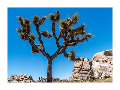Joshua Tree National Park and the Mojave Desert - July 2019