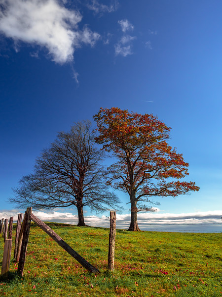 67 Oct 2020 BRPW Trees in Paasture (1 of 1).jpg