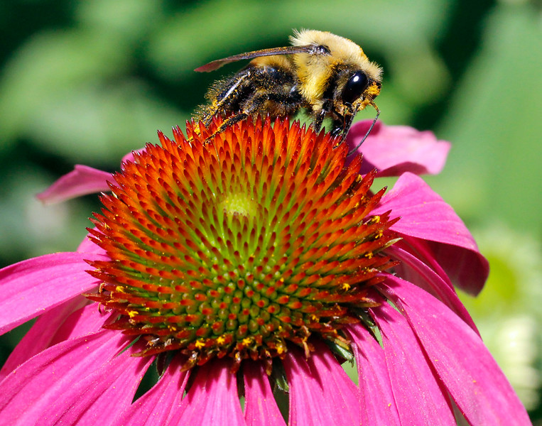 Bumble bee 12