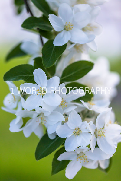 201905152019 Neighborhood Blossoms080--152.jpg