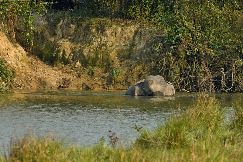 Elephant-swimming-across-lake-kaziranga-1.jpg