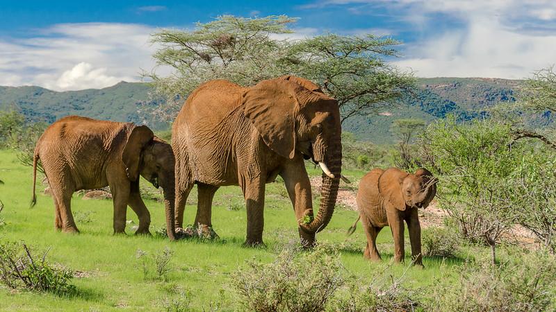 Elephants-0204.jpg