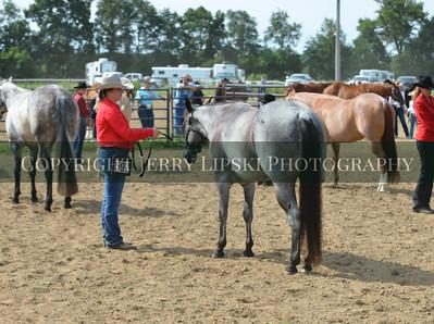 Class 6  . Quarter Horse Halter