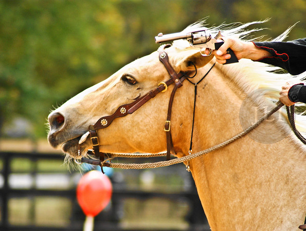 CMS Horses 33