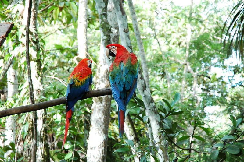 Peru Ecuador 2007-086.jpg