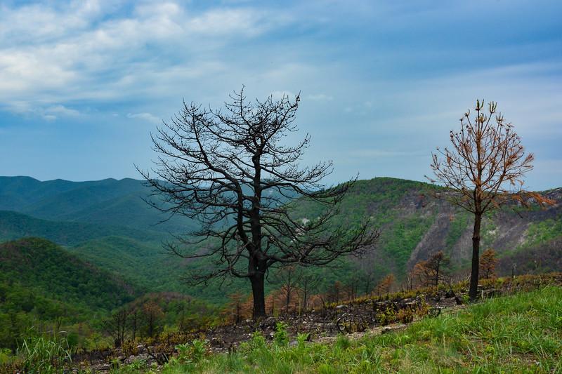 loft-mountain-222.jpg