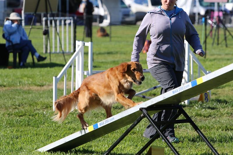 3-31-2018 Shetlant Sheepdog-2372.jpg