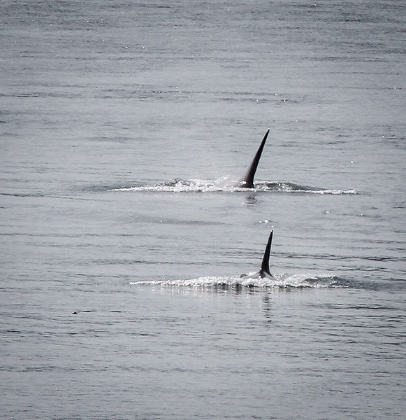 My very first photo ever of whales!