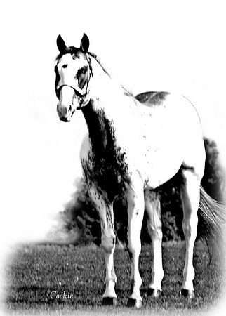 'Stock'  horse images