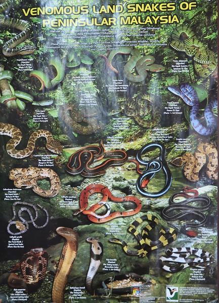 IMG_5197-snakes.jpg