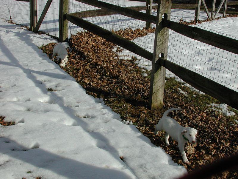 Feb 05- Puppies 008.jpg