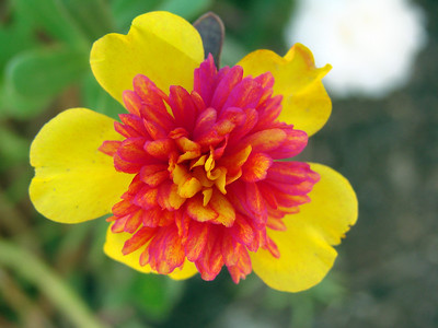 Sweet Home & Home Gardening - Part 2