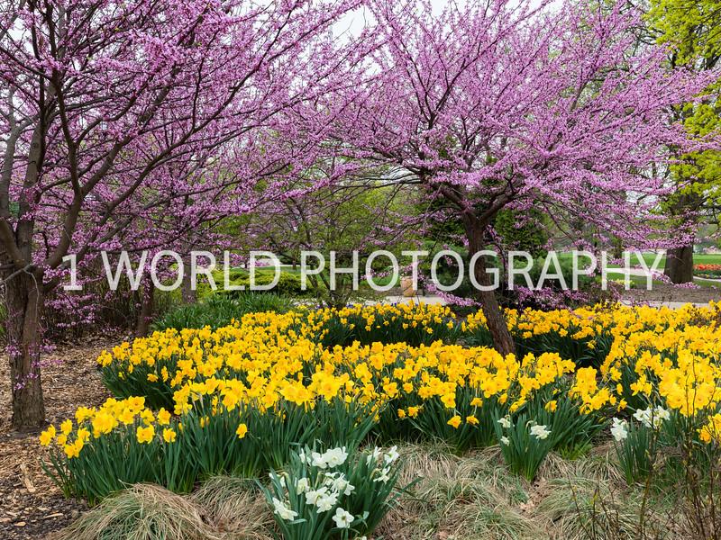 Cantigny Spring 2017-2-36.jpg