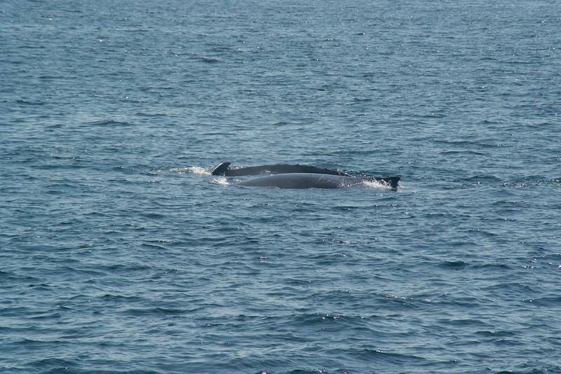 humpbacks-4099.jpg