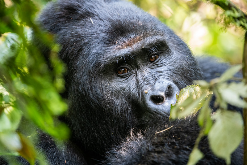 Uganda_T_Gor-1686.jpg