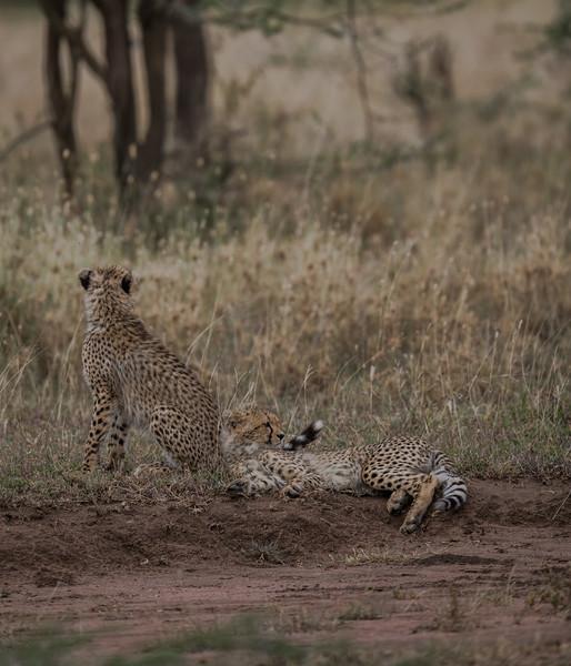 Tanzania_Feb_2018-1201.jpg