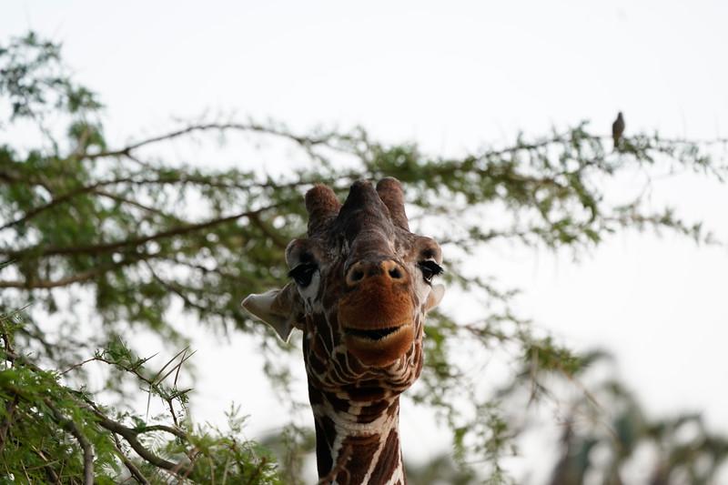 safari-2018-17.jpg
