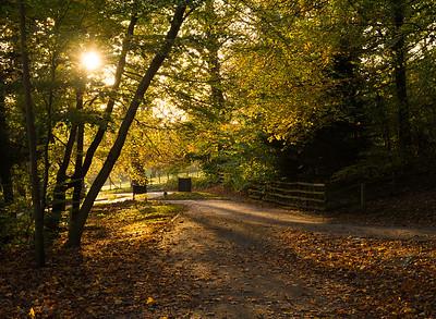 Glasgow in Autumn