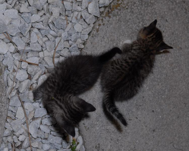 2007 04 12 - New Kitty 043.JPG