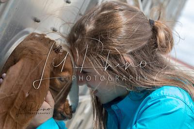 HLSR 2018 - Goats, Lambs, Cattle