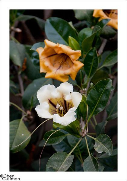 פרחים, וילה תהילה