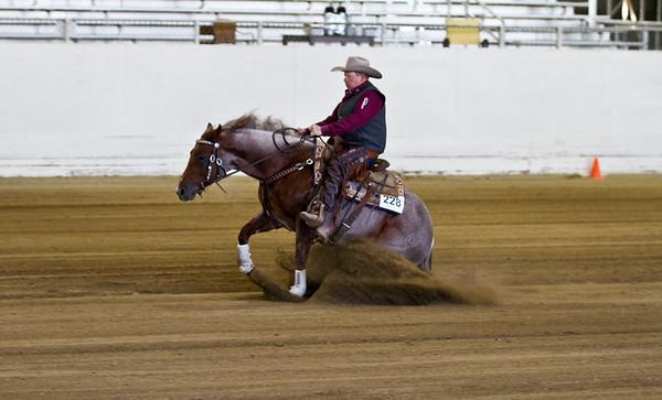 Junior Horse