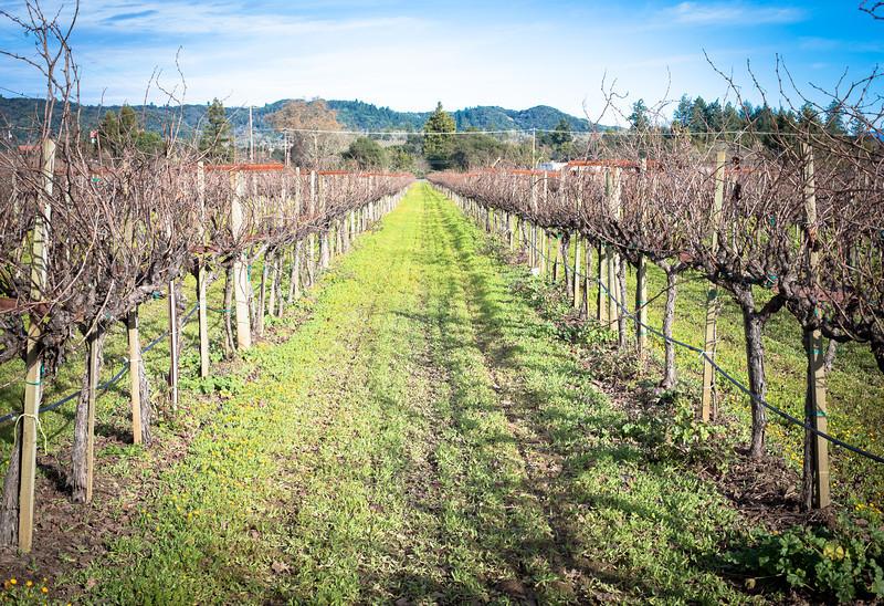 wineries-8800.jpg