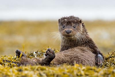 Otter Workshop
