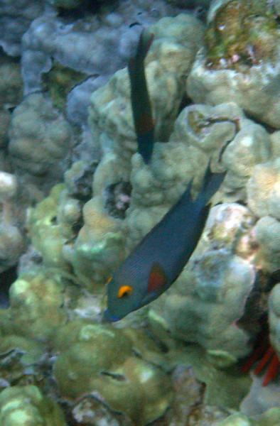 430- 20080416- Hawaii 20-Snorkelling IMG_0592.jpg