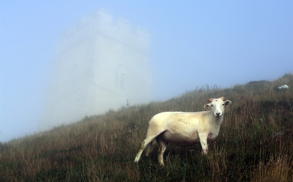 . Sheep graze beside the 14th-century St. Michael\'s Tower, on Glastonbury Tor as the sun rises and begins to clear the early morning mist and fog near the town of Glastonbury on September 4, 2013 in Somerset, England.  (Photo by Matt Cardy/Getty Images)