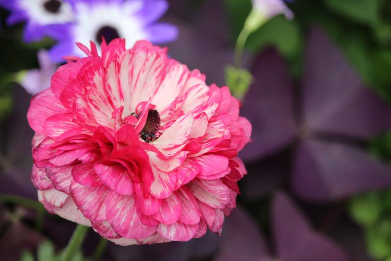 KoRedfield-Floral47.jpg