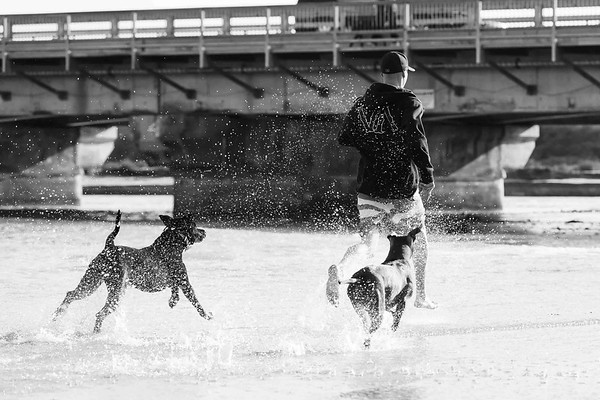 AJ Gourlay Gunner & Sullivan Dog Beach Del Mar California USA