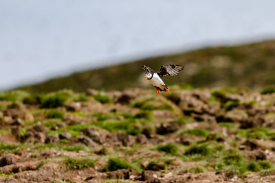 2019-06 Puffins, Boats and Other Shots