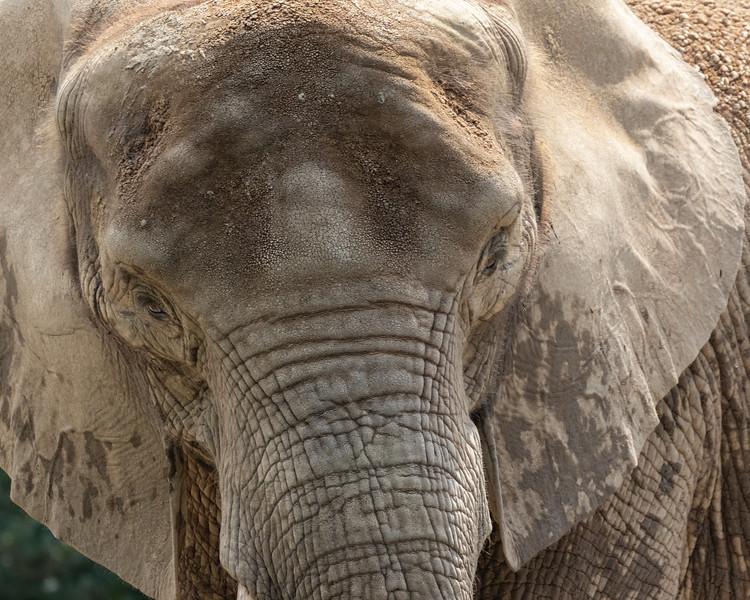 Pittsburgh Zoo-7214.jpg